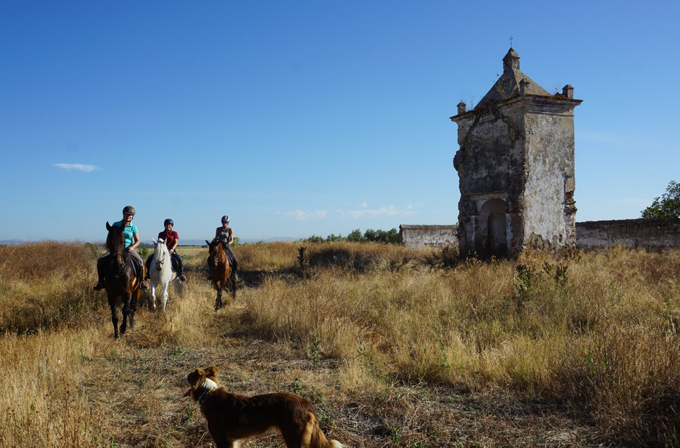 andalusian horse and culture.jpg