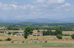 68-DSC_0550 cut LANDSCAPE gallop