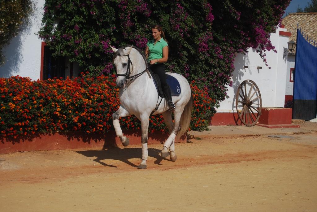 Конные туры в Испании, выездка