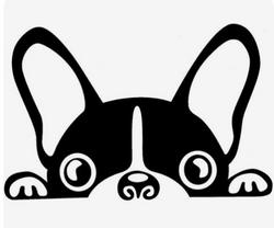 Rogério Dog