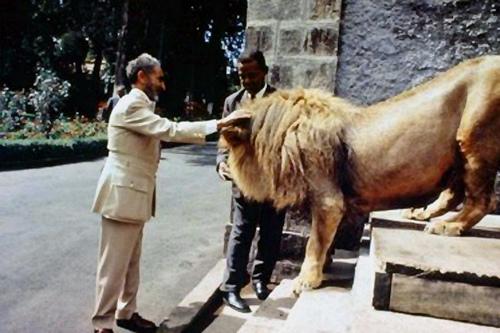 H.I.M.-Haile-Selassie-I-Lion1.jpg