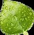 floating Leaf.png