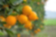 naranjas sanas.jpg