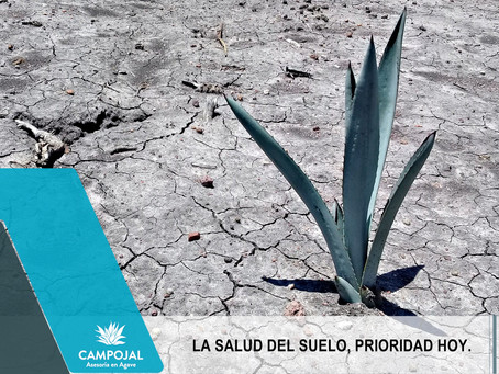 LA SALUD DEL SUELO Y LA PRODUCCIÓN DE AGAVE.