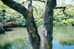 © Gray Kotze - Peaceful Garden
