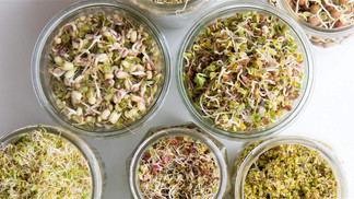 Sprouting 101: A Guide for Impatient Growers