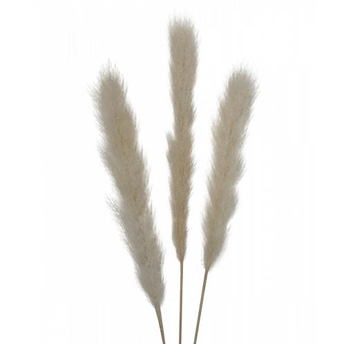 Branche de pampa - Naturel