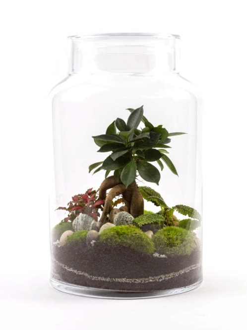 Terrarium Flat M Ficus