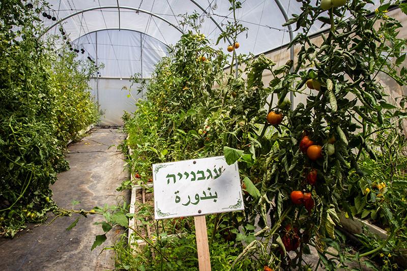 החווה-החקלאית-(9).jpg
