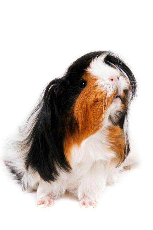Dierenfotografie Shampoo