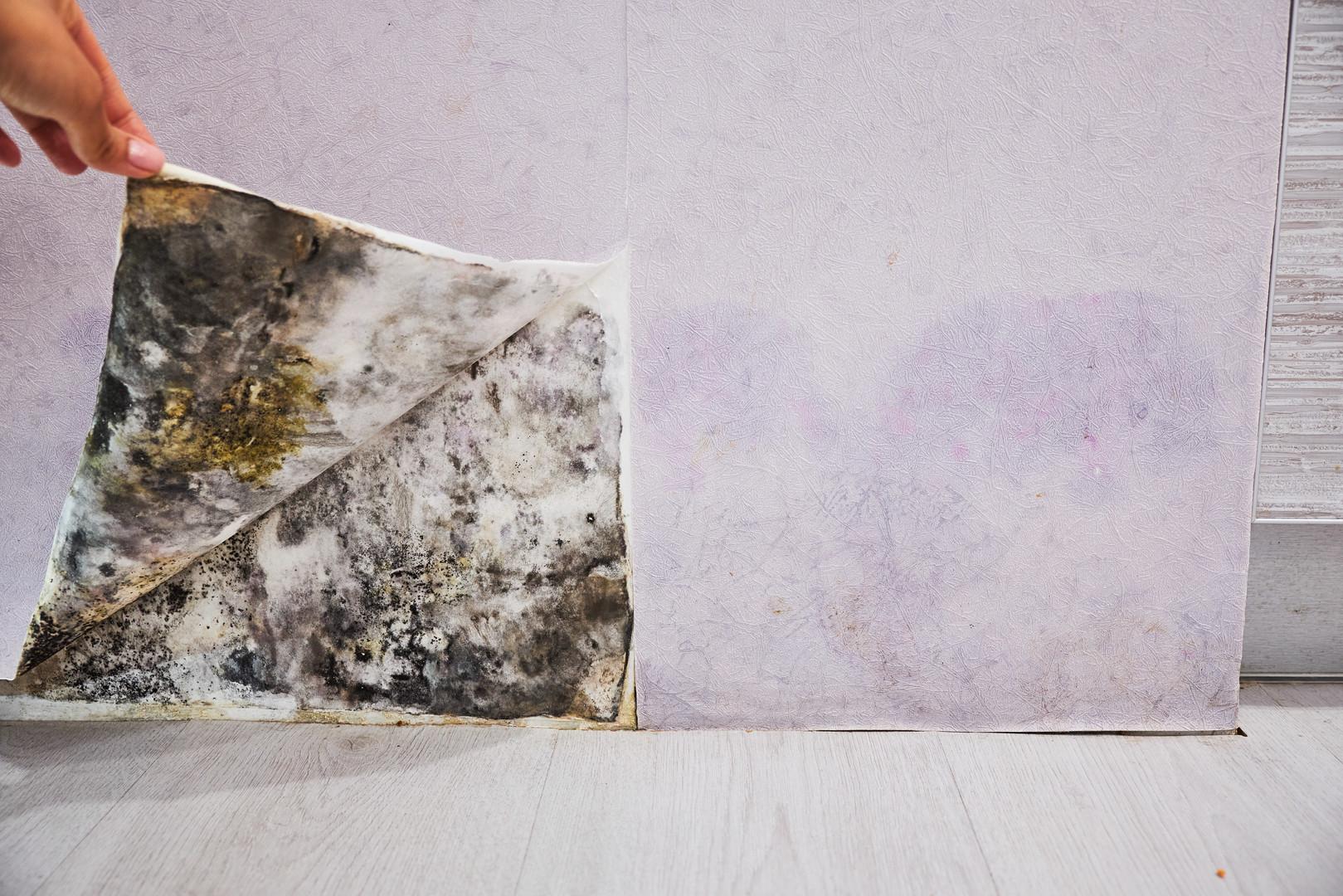 Mold Wall.jpeg