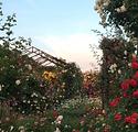 tsukuba rose&plants.png