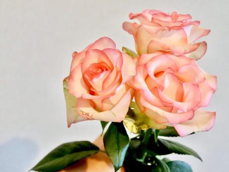 IBARAKI Flower Market 開催まであと1ヶ月!