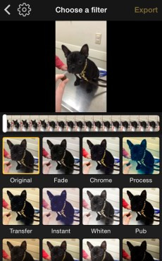 Become a Veterinary Video Pro