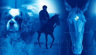 Vet Appidemic: Introducing Veterinary Advances and Equine Drugs