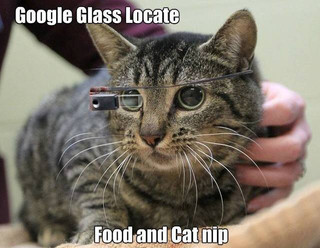 Google Glass in Veterinary Medicine?
