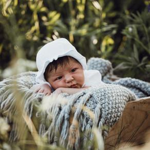 Nyfødt // Blomstrende lupiner