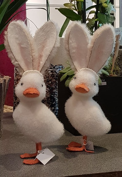 un canard déguisé en lapin ...