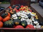 amap falaisienne legumes