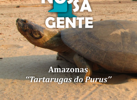 Tartarugas do Purus