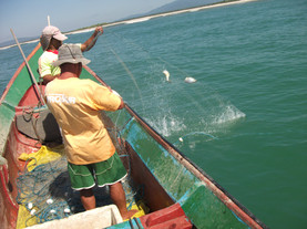 beneficiamento-pescado-pesca-artesanal-b