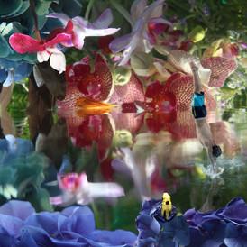 Lenticular, Submerged Garden Oasis