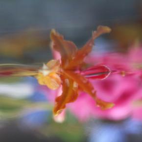 Artisan Textiles (Submerged Garden Series), Inquire for liscensing, materials (wallpaer, silk, linen, duratrans)