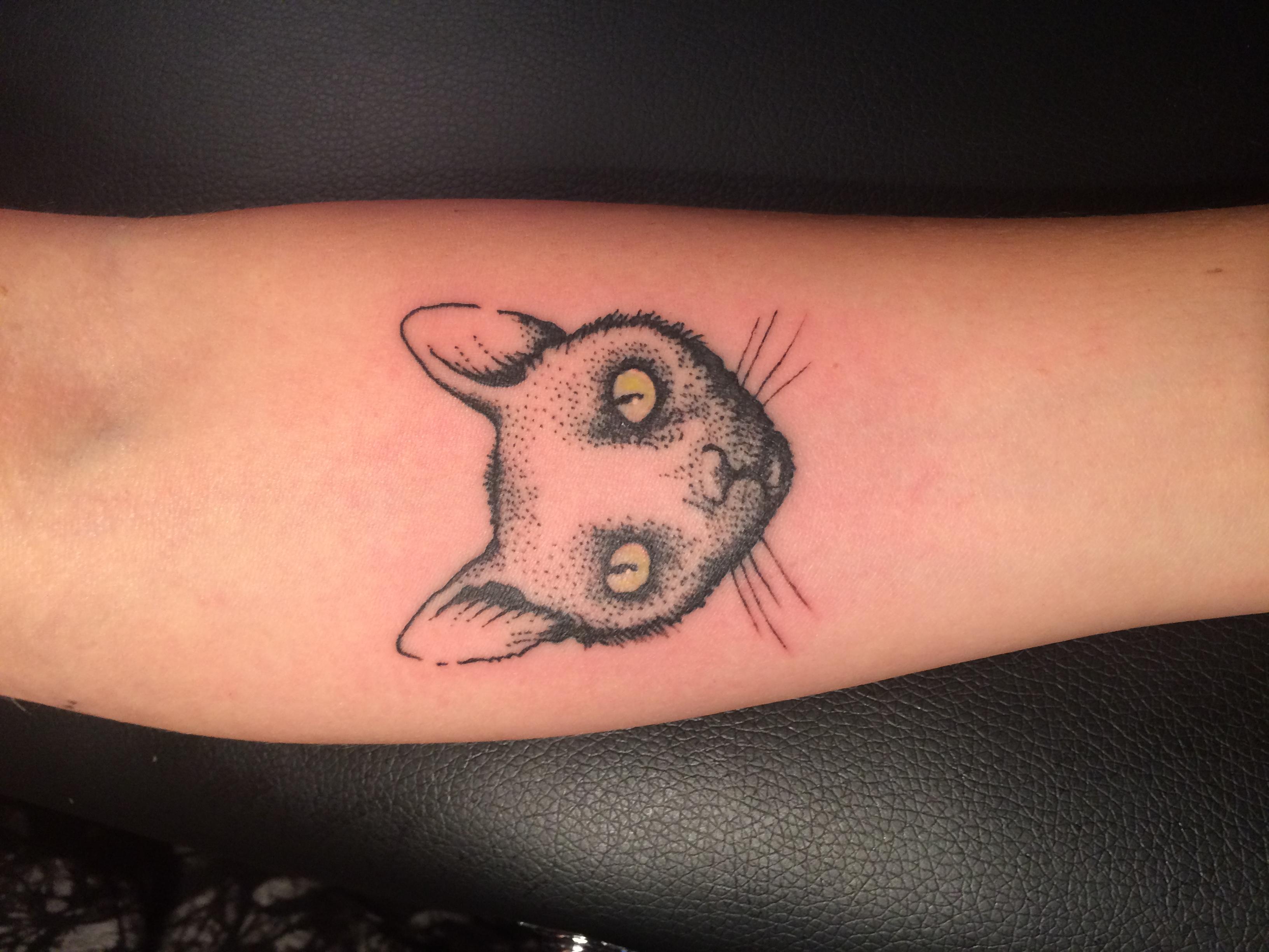 Stefan cat