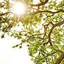 arbre site.JPG