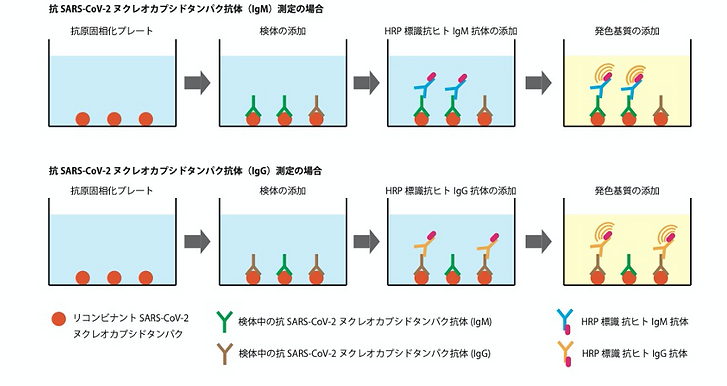 figure_principle_IgM IgG Spike Protein.p