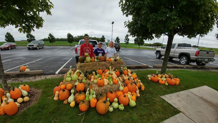 Pumpkin selling 3