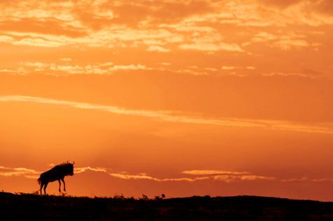Lever de soleil, Massaï Mara