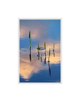 Lisle Warner 'Reflections'