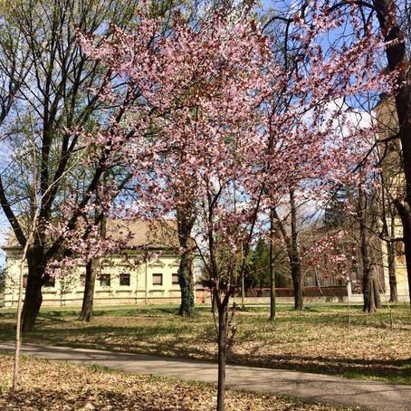 Prolećno drvo, likovna aktivnost