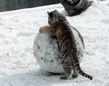 Čudovište u ledu, igračka za decu