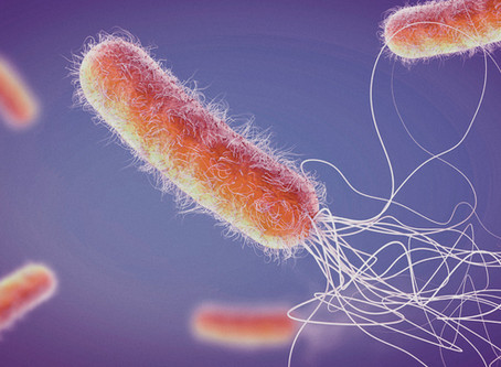 Pseudomonas aeruginosa, what is it, and what we can do to prevent contamination.