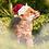 Thumbnail: Christmas Cub