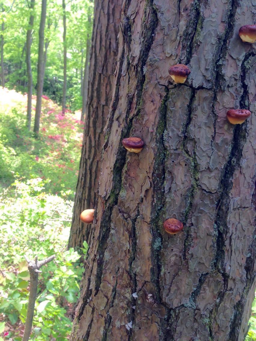 Fungi? Castilla?