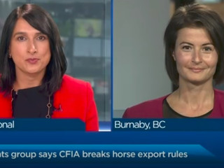 Animal rights group claims in lawsuit CFIA broke horse export rules