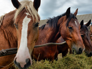 Opinion: We need to stop shipping Canadian horses overseas for sushi