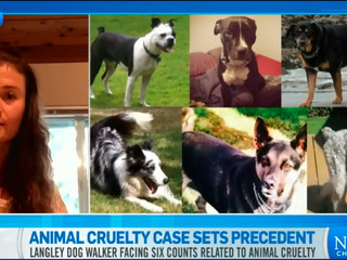 B.C. dog walker charged with animal cruelty