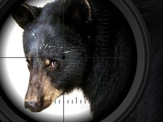Stop Killing Bears