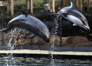 Will rocky relationship between park board, aquarium end up in court?