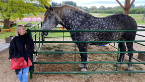 Grounding horse slaughter flights focus of Jann Arden's, nationwide petition attention