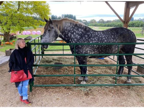 #Horseshit Rebeka Breder animal law lawyer