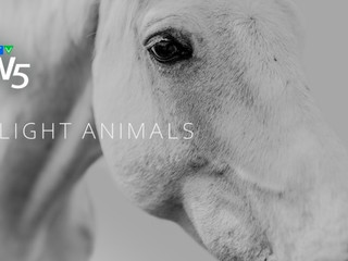 Investigation Of Canada's Controversial Horse Slaughter Industry.