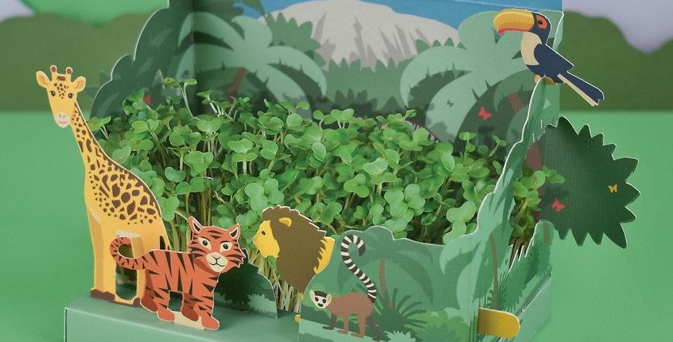 Grow your own mini jungle garden