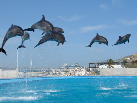 Incredible Places to Swim With Dolphins In The Caribbean