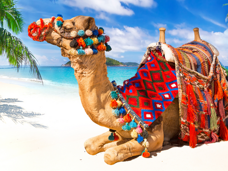 Riding Camels In The Caribbean