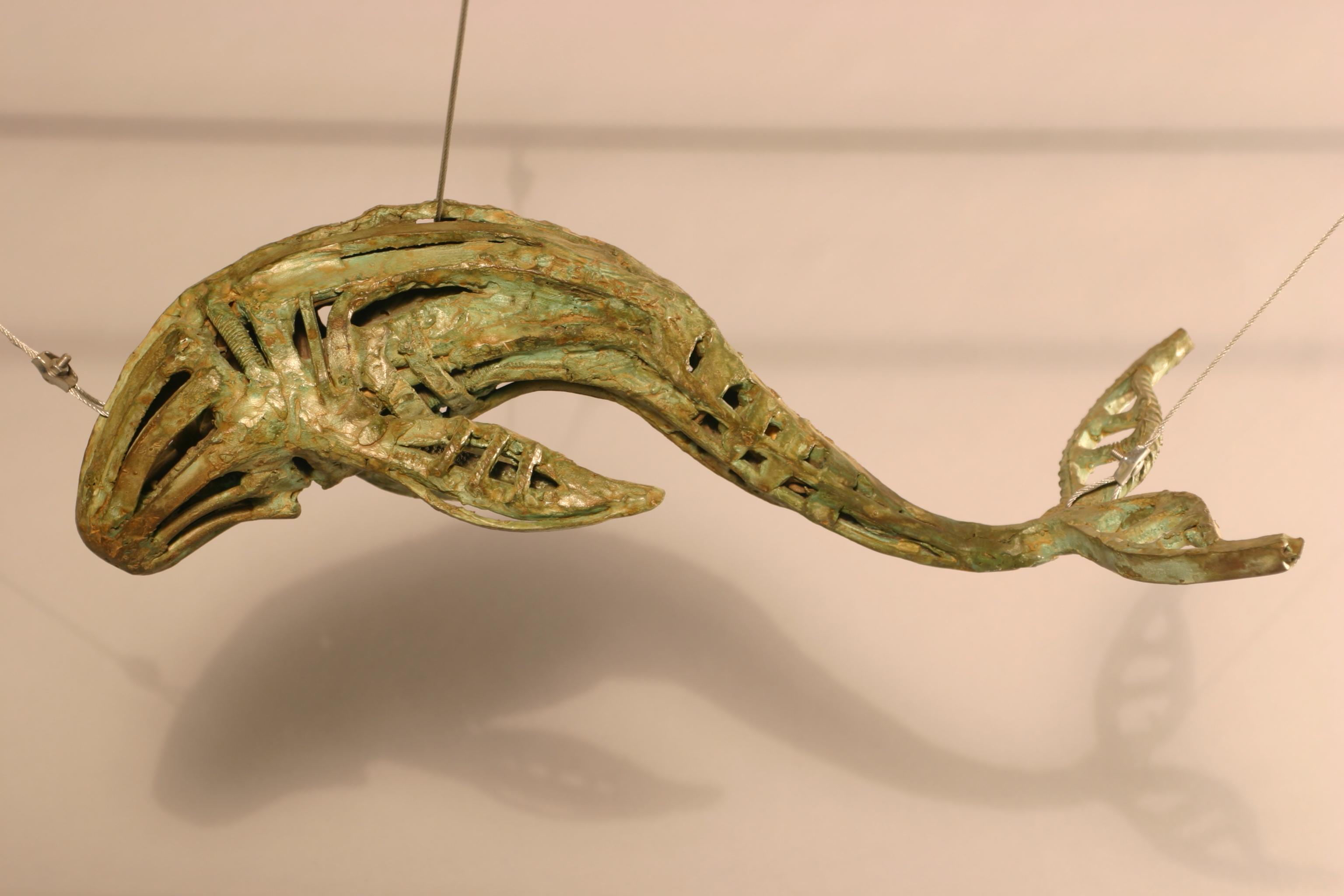 cetaceo 1